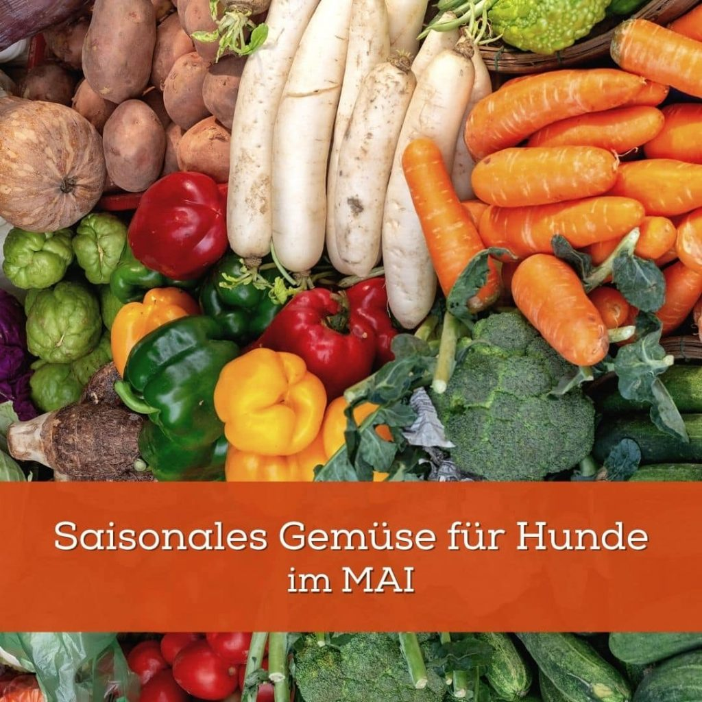 Saisonales Gemüse für Hunde im Mai_Blogartikel